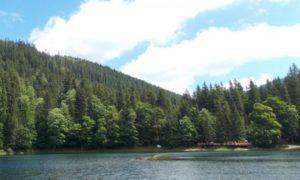 Лісівники Закарпаття обговорили можливість використання космічних знімків «Google Maps» у лісфонді