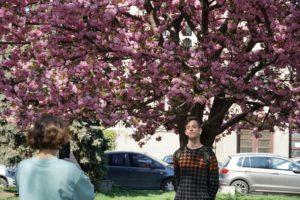 Ужгород встановив туристичний рекорд через цвітіння сакури