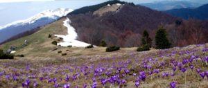 Весна добралась до полонин на Рахівщині (ФОТО)