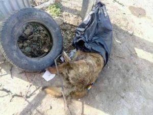 Зоозахисники Ужгорода опублікували жахливі фото розправи над тваринами