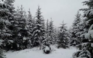 В Ужгороді сакури, а в Ясінях на Рахівщині сніг (фото)