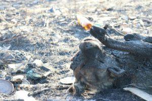 Закарпатські рятувальники показали шокуючі кадри пожеж на рівнинах та у горах