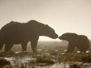 Науковці показали вражаючі фото материнства диких тварин