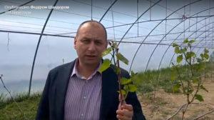 Федір Шандор презентував перший біодинамічний виноградник