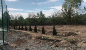 Зі стадіону Авангард в Ужгороді вкрали 23 нещодавно посаджені туї