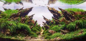 Ужгородська аквадизайнерка Тереза Лазар створює неймовірні сакурові сади та тропічні ліси в акваріумах (ФОТО)