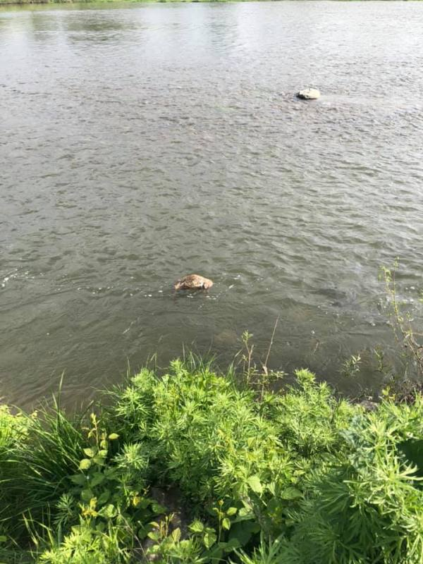 У Мукачеві вбили собаку, а труп викинули у річку (фото)