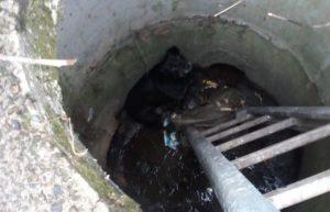 У Мукачеві нелюд викинув в колектор собаку в мішку (ФОТО)