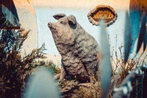 """Волохаті свині, музей леквару, """"Любов і голуби"""": Подорож до незвичайних селищ Закарпаття (фото)"""