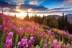 Неймовірні літні Карпати (фото)