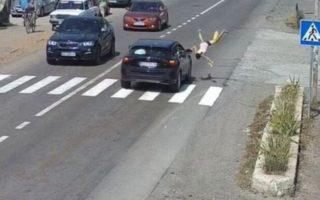 На Закарпатті Lexus збив дівчинку на переході