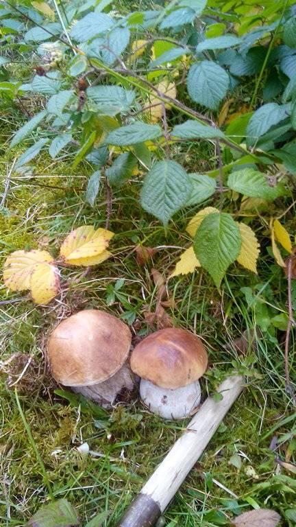 Грибний осінній сезон вражає! (фото)