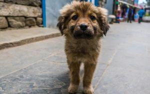 На Ужгородщині жорстоко труять собак