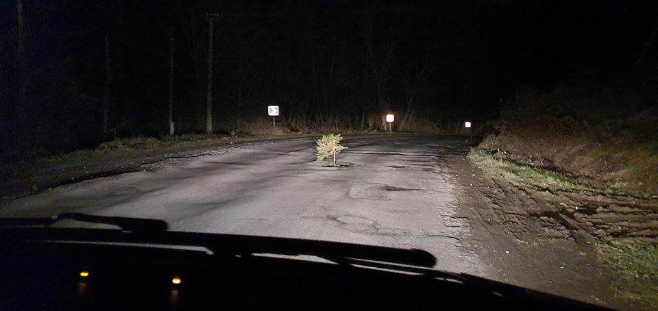 З ям на дорогах Перечинщини ростуть ялинки (фото)