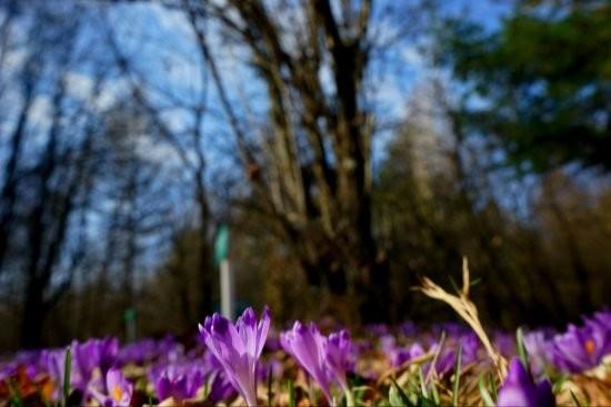 На Закарпатті розпустилися десятки тисяч квітів: яскраві фото та відео