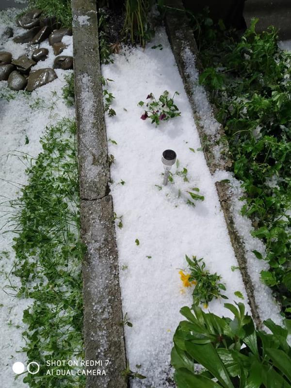 Град на Закарпатті знищив урожай (фото)