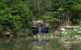 У стилі Playboy та Maxim: фотосесія для бурих ведмедів 😉