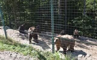 У Реабілітаційному центрі бурих ведмедів оселилися ще двоє клишоногих