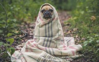 На Закарпатті очікується ускладнення погодних умов: різке похолодання