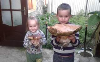 Закарпатець знайшов гриба-гіганта (фото)