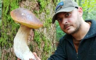 На Рахівщині знайшли гриба-гіганта
