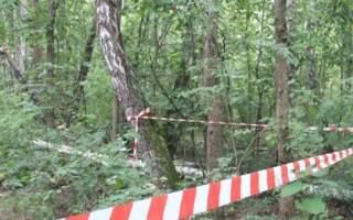 У лісі на Закарпатті виявили труп людини