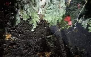 У селі Сімер, що на Перечинщині, невідомі підпалили Новорічну ялинку