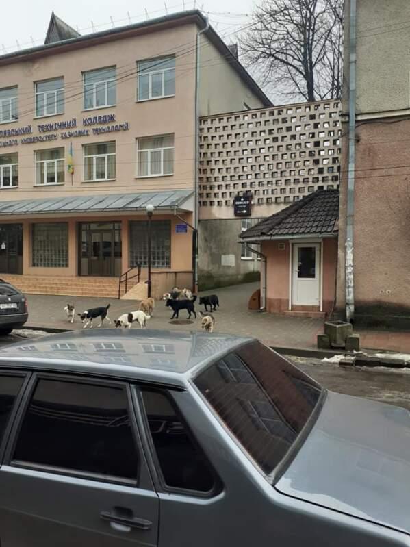Безпритульні собаки у Сваляві не дають містянам проходу (ВІДЕО, ФОТО)