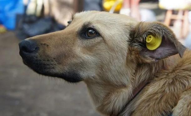 У Сваляві почнуть стерилізувати собак