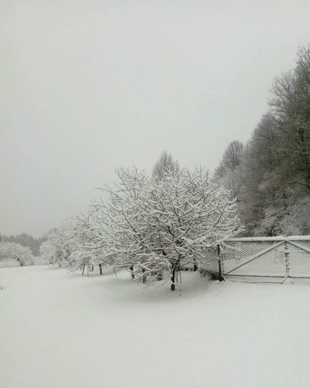 Закарпаття засипало снігом (ФОТО)