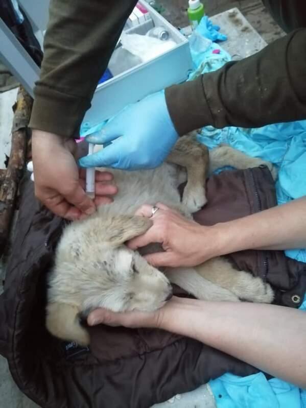Жорстокість циган: Відрубали хвіст і залишили помирати під трансформатором (ФОТО)
