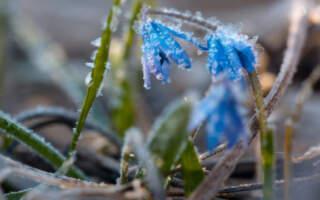 Штормове попередження: на Закарпатті очікують заморозки