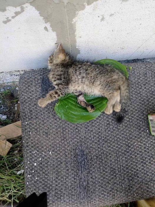 """""""Тільки одне кошеня залишилося живе, з переломними лапками"""", - діти на Закарпатті повбивали кошенят (ФОТО)"""