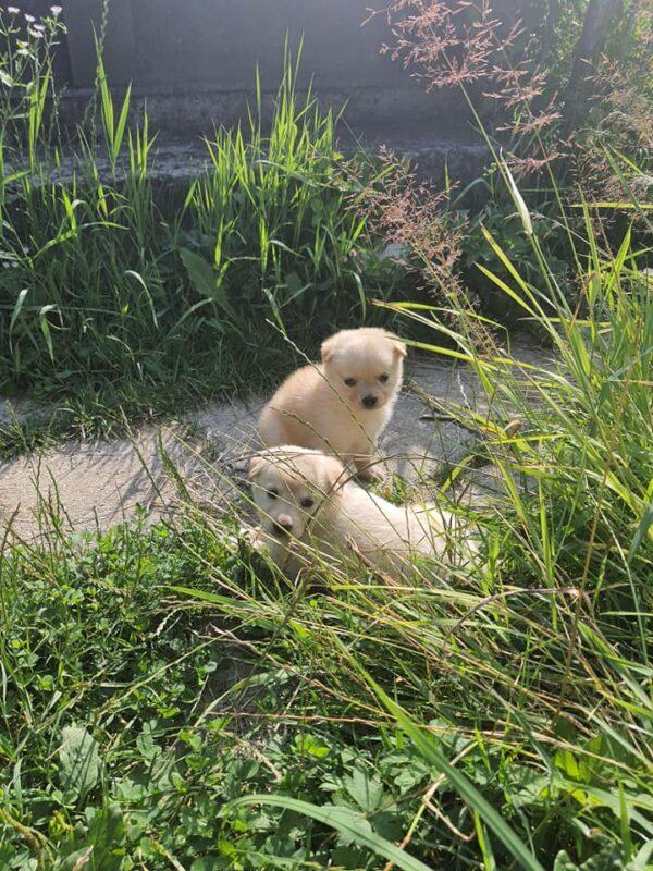 Читаючи цю новину, знайдуться люди, які дуже люблю тварин, - у Рахові на кладовище хтось викинув неймовірно гарних цуценят (ФОТО)
